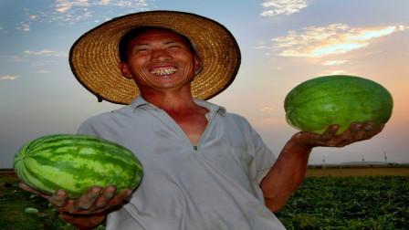 """这种""""懒汉瓜"""",种在地里不用,瓜农躺着赚10多万"""