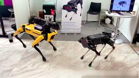 中国机器狗vs美国机器狗,猜猜谁更胜厉害?对比很明显!