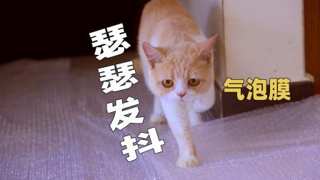 在地上铺满气泡膜,猫咪能走过去吗?猫:踩雷了!