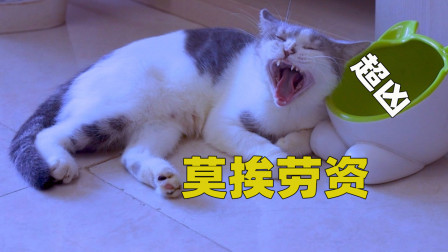 小猫一靠近猫妈就被暴打,猫:这是家暴!