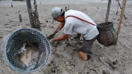 泰叔赶海端了一窝猛货,连螃蟹都不是对手,按个头定价越大越值钱