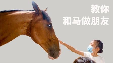 为什么马是人类的好朋友?带娃探马厂,一招教你看懂马的心情