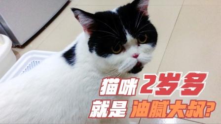 两岁多的猫相当于油腻大叔?奶牛猫小阿白:你把我给说老了!
