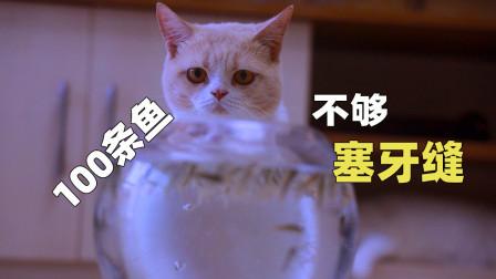 给猫咪100条活鱼会发生什么?猫:不够塞牙缝!
