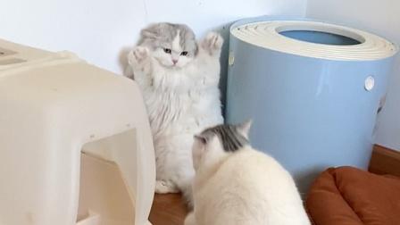 因为一块肉小猫咪记仇到现在,见面就掐