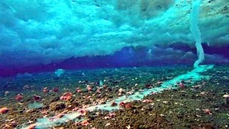 """海洋里的""""死亡冰柱"""",从海面直入海底,堪称""""动物杀手""""!"""