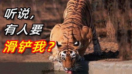 滑铲老虎!摔死大象!人在极度愤怒时有多强?【鉴盘侠#3】
