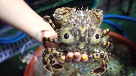又到了吃虎蟹的季节,满满的蟹黄爆汁到流油,太馋人了