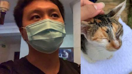 带小猫咪看医生|小纪录片