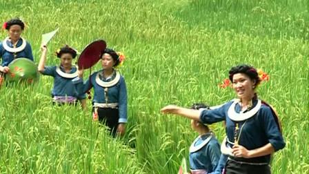 栽秧的小卜哨——卫明儒原创音乐作品
