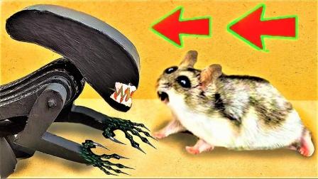 当仓鼠进入陷阱迷宫后,遇到BOSS能救女友吗?