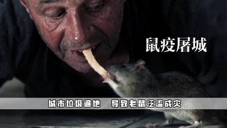环境恶化导致老鼠泛滥成灾,整个城市陷入巨大危机:鼠疫屠城