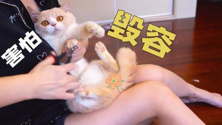 给4只猫剪指甲,铲屎官差点被抓到毁容,把这猫丢了!