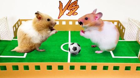 给仓鼠举办一场世界杯,谁能获得最后胜利?