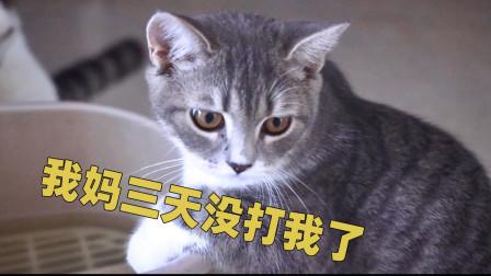 小猫偷喝拖桶里的水,铲屎官崩了,又要挨揍!