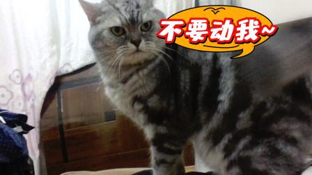 小萌猫超你粘人的,会撒娇会卖萌,还会生气,看这样子好严肃呀!