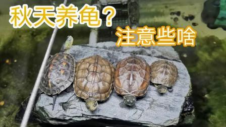 到了秋天,养龟有哪些需要注意的地方