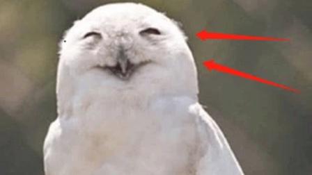 猫头鹰一笑就会有人去世?科学家做出解释,这并不是迷信!