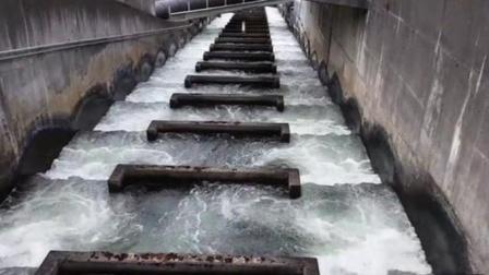 鱼梯是干什么用的?为什么建在水电站上?今天总算长见识了