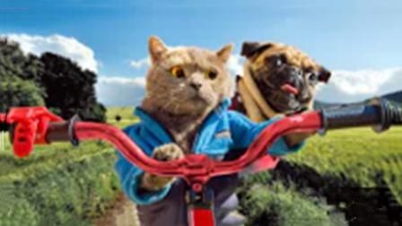 猫咪的寻亲记,过程呆萌又搞笑,结果让人非常意外!