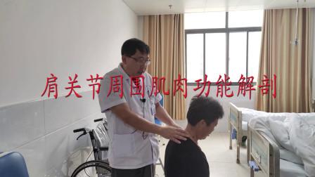 肩痛诊断基础,肩关节周围肌肉功能解剖,干货分享