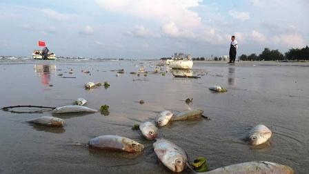 """""""数以万计""""鱼群拼命涌上沙滩,这是发生了什么大事吗?"""