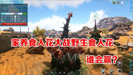 方舟生存进化:帕格纳西亚12,驯服彩虹独角兽!家养花VS野生花!