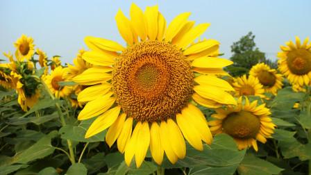 【双节特辑】我们都是向阳花