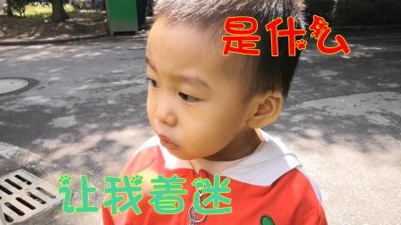 2岁小孩去奶奶家过节,路上什么让他着迷,爸爸怎么叫他都肯不走