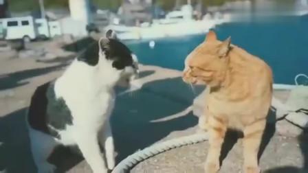 橘猫:这就是所谓的同归于尽鲨鱼:先吃哪个,好纠结!