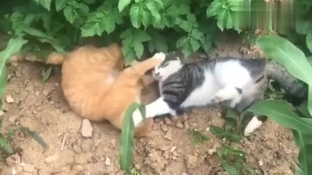 橘猫:兄弟我们是开玩笑的,你别打我脸行不!