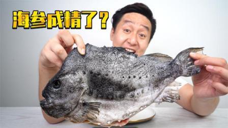 试吃来自北极的海参斑,长得最像海参,口感最像猪蹄的鱼