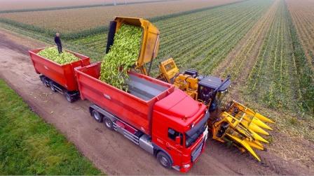 大型联合玉米收割机真正解放了劳动力,一小时200亩,效率真高