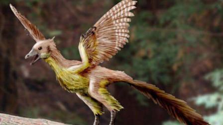 恐龙进化成鸟类有了实锤,科学家找到证据:它们丢了一侧卵巢
