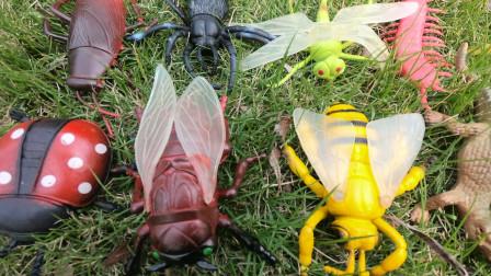 学习认识七星瓢虫 蜻蜓等多少昆虫