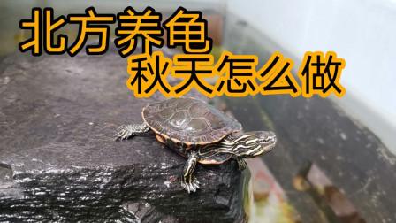 北方养龟,秋天需要注意些什么,北方如何给龟冬眠
