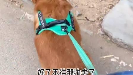 狗狗发现一只受伤的小鸟