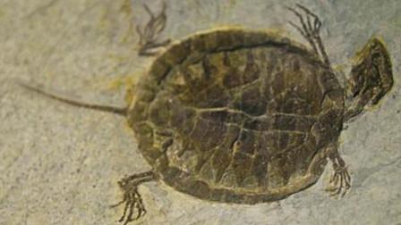 阿根廷科学家复原2亿年前乌龟,样貌跟现在差别巨大,还不会缩壳
