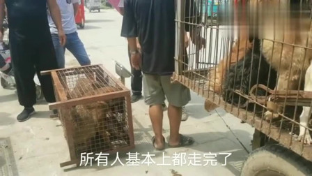 农村狗市:今天狗市大集,上好的马犬没人买,都卖给剥狗的了,全进狗肉车了