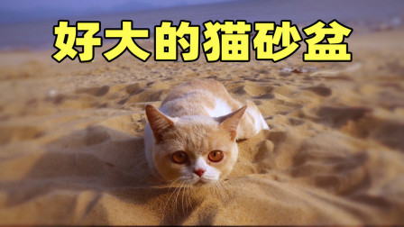 第一次带猫咪去旅行,猫:好大的猫砂盆,差点吓尿了!