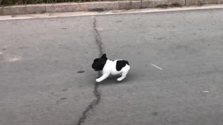 搞笑视频:我堂堂一匹汉血宝马却被一只小狗牵着鼻子走
