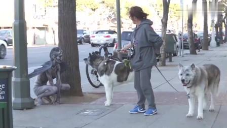 """""""恶魔""""蹲在街头寻找猎物,不料一只憨狗傻傻靠近,下一秒不准笑!"""