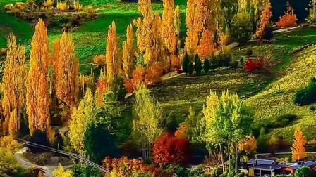 秋天金色美如画!