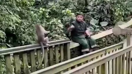 猴子玩不过男子,但是良心上过得去吗,跟动物还玩这么真格的让人瞧不起!