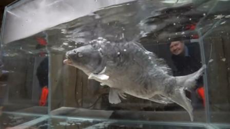 零下183度的液氮究竟有多厉害?看这条鱼的下场,你就明白了