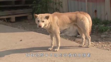 狗狗失踪数月,找到后却不认主人,结局太暖了