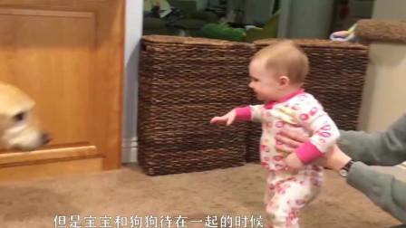 宝宝生气大骂自家狗狗,看到这一幕爸妈忍不住笑了