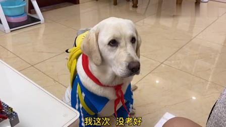 狗狗考试没考好,本以为主人会批评它,结果却被主人说的话感动哭
