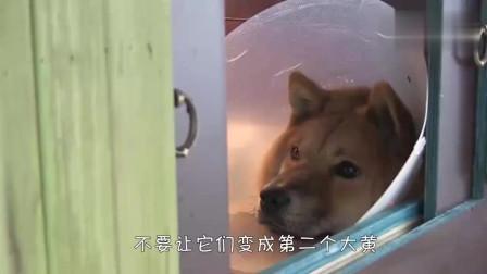 狗狗分娩后变得怪异,不停地咬自己尾巴,原因让人心疼