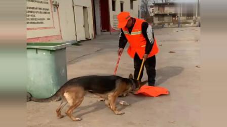狗狗都知道的道理,人类的做法真寒心,狗狗,为你点赞